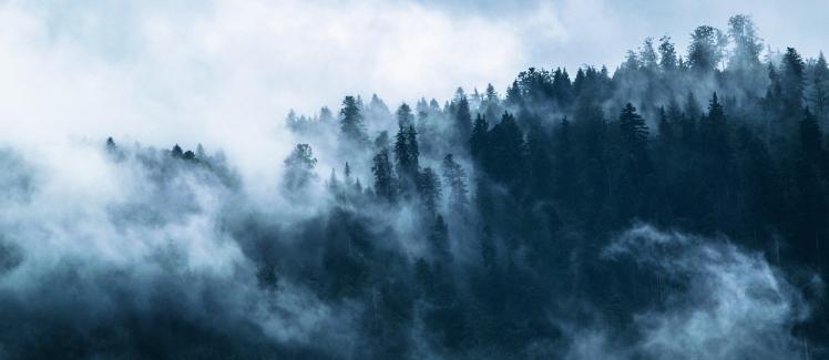 fog-1535201_1280.jpg